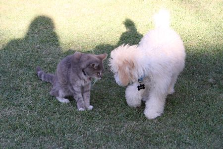 Meeting Whiskers